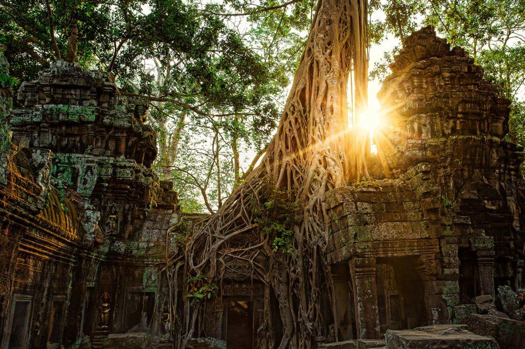 baby-elephant-tours-angkor-wat-005